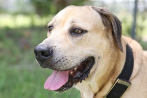 Tom is among several dogs and cats who would love a loving home in Boca Raton.