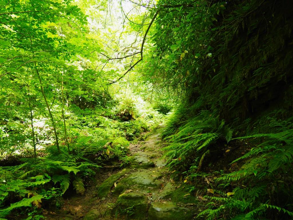 緑深いハイキングコース