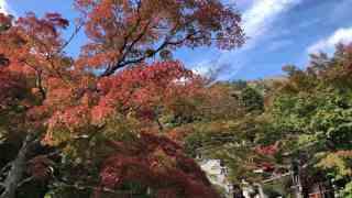 大山登山阿夫利神社の紅葉
