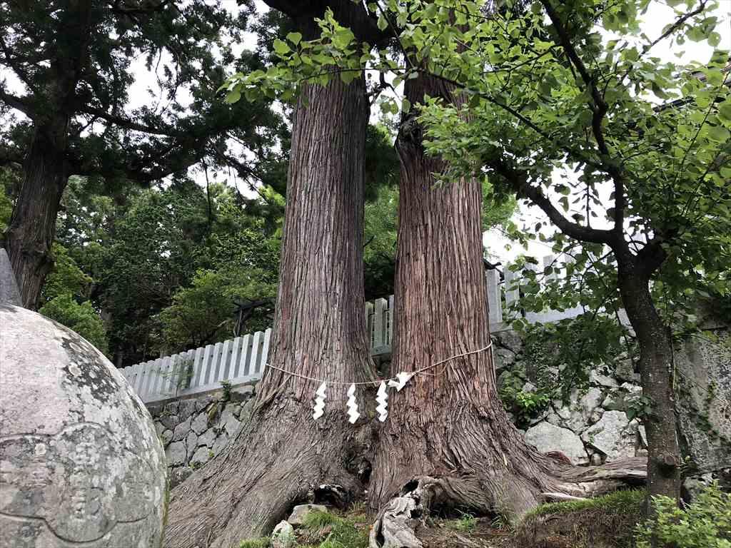 筑波山神社夫婦杉