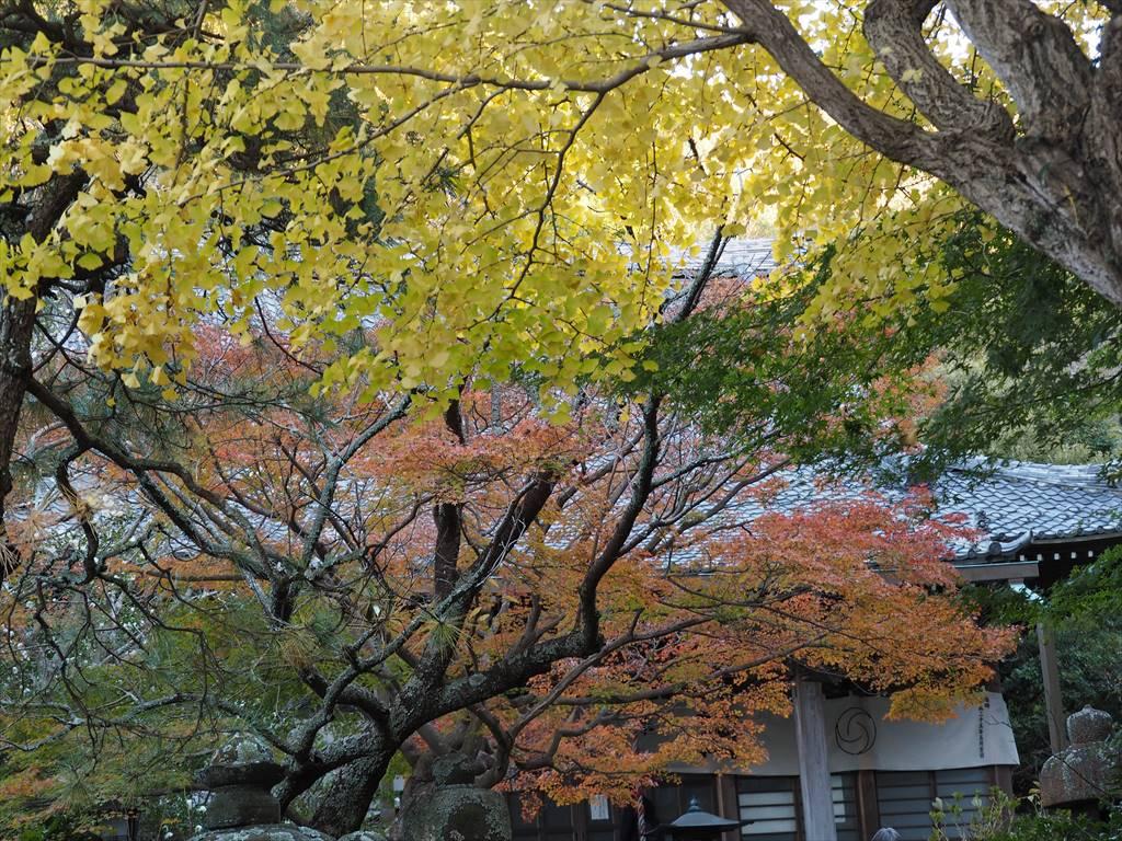 鎌倉の紅葉 安国論寺