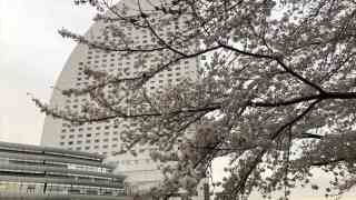 桜木町さくらまつり