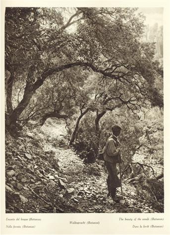 Encanto del Bosque
