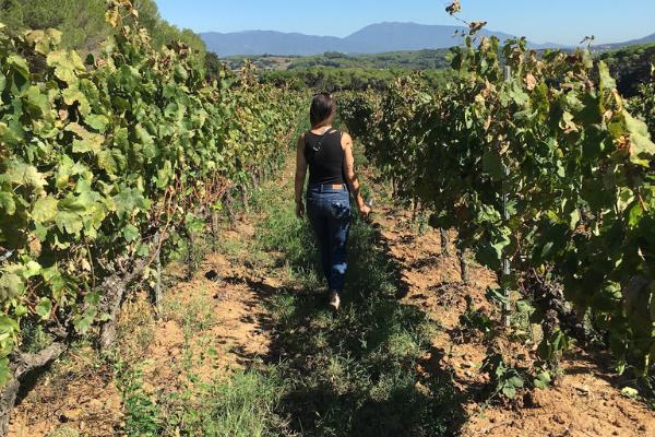 Spanish Wine Export Department at Bodega Maestrazgo - Import the best of Spanish Wines