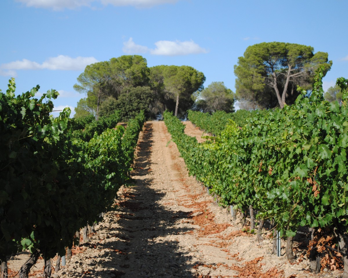 Bodegas Javier Ruiz - Our vineyard