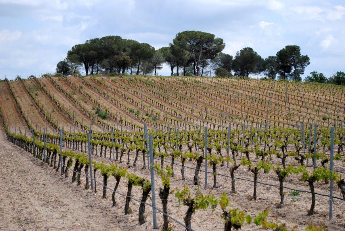 bodegas-javier-ruiz-vino-rueda-primavera-4