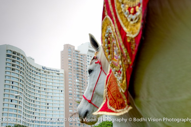 Bodhi Vision Photography, Hindi Wedding Photography, Durban Indian Wedding Photography, Indian Wedding Horse in Durban, Durban Hindi Indian Bride Photography
