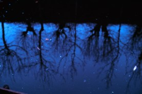 reflections6