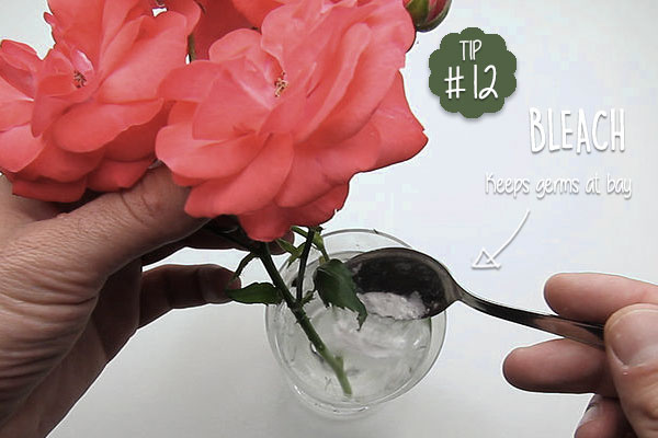 To-keep-cut-flowers-fresh-for-longer-use-bleach-to-kill-germs