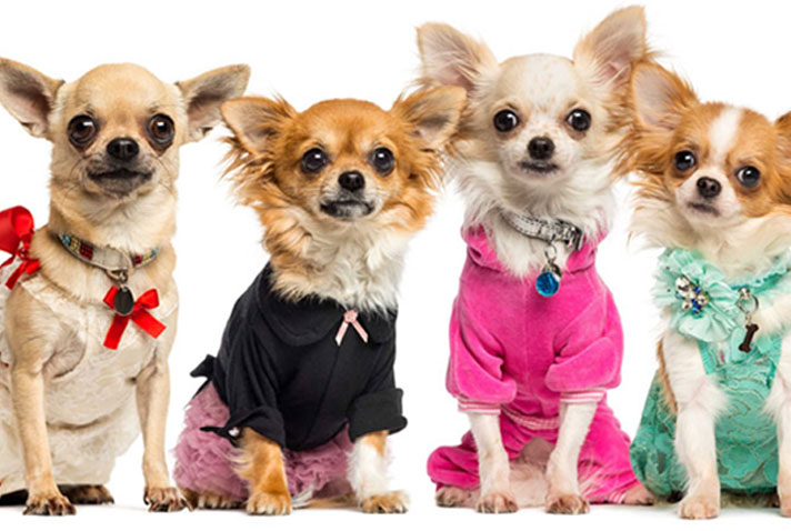 7 DOG-THEME PARTY IDEAS — WITH A GENIUS CHIHUAHUA TWIST!