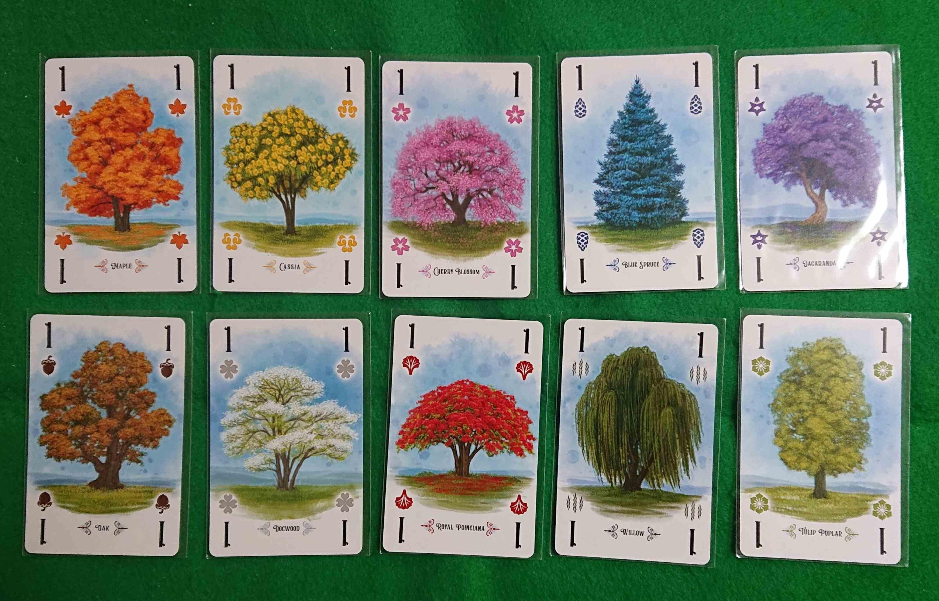 アーボレータム(ARBORETUM) 綺麗な並木道を作ろう! 見た目とは反対にシビアな苦しい楽しいカードゲーム ボードゲーム