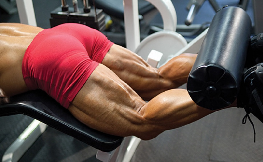 Hamstring Muscles Functional Anatomy Guide %e2%80%a2 Bodybuilding
