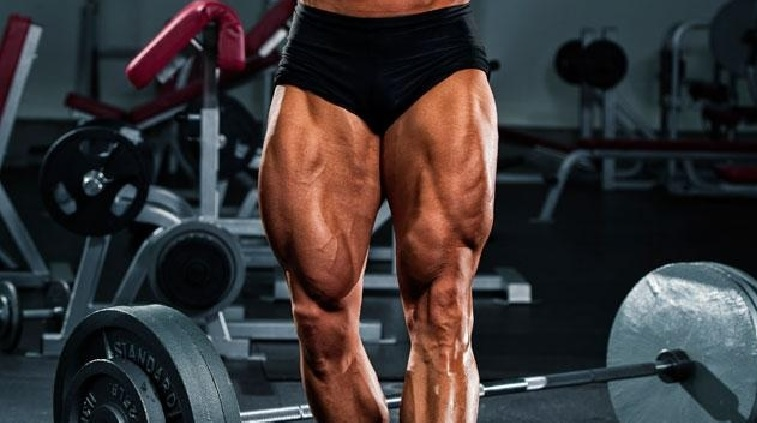Image result for quadriceps muscles
