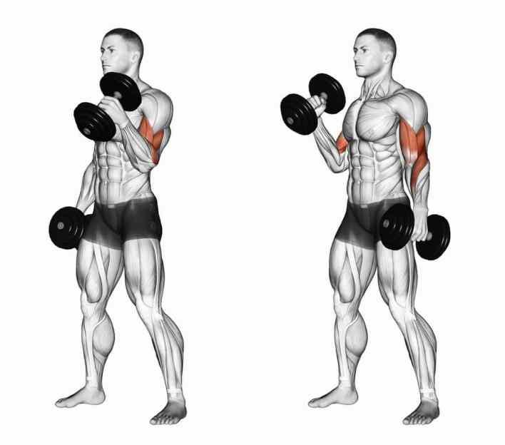 Triceps Pushdowns