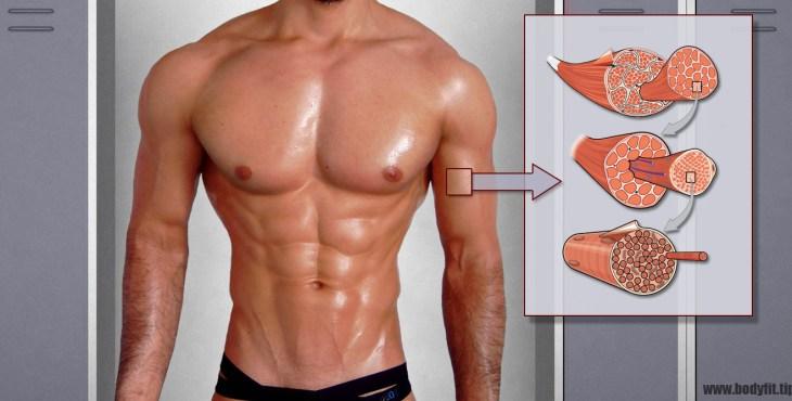 Muskelfasertypen
