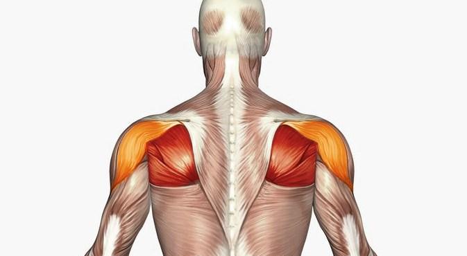Außenrotation Am Kabelzug trainierte Muskeln