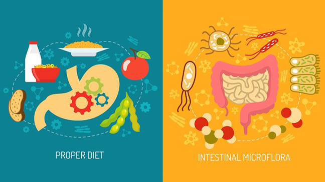 bodyfit-superstore-how-diet-effects-gut-microbiome