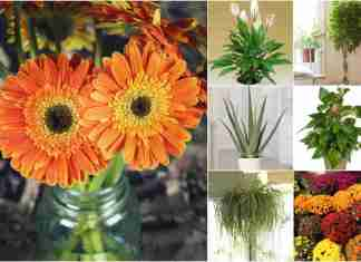 Best-plants-to-purify-air-in-home-according-to-NASA-