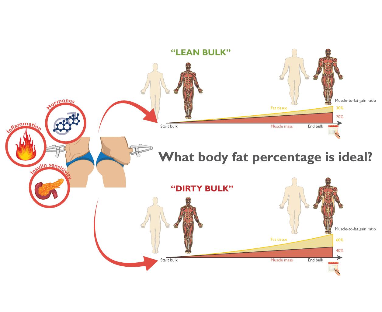 The ideal body fat percentage to bulk - Stijn van Willigen