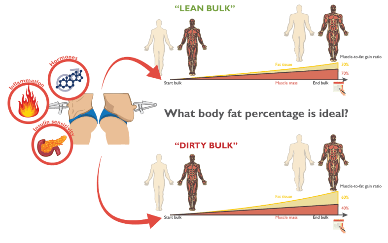 The ideal body fat percentage to bulk - Stijn van Willigen