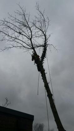 boom-verwijderen4