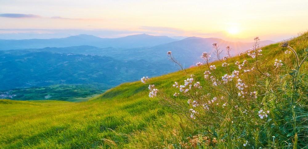 Grassland by Moyan Brenn
