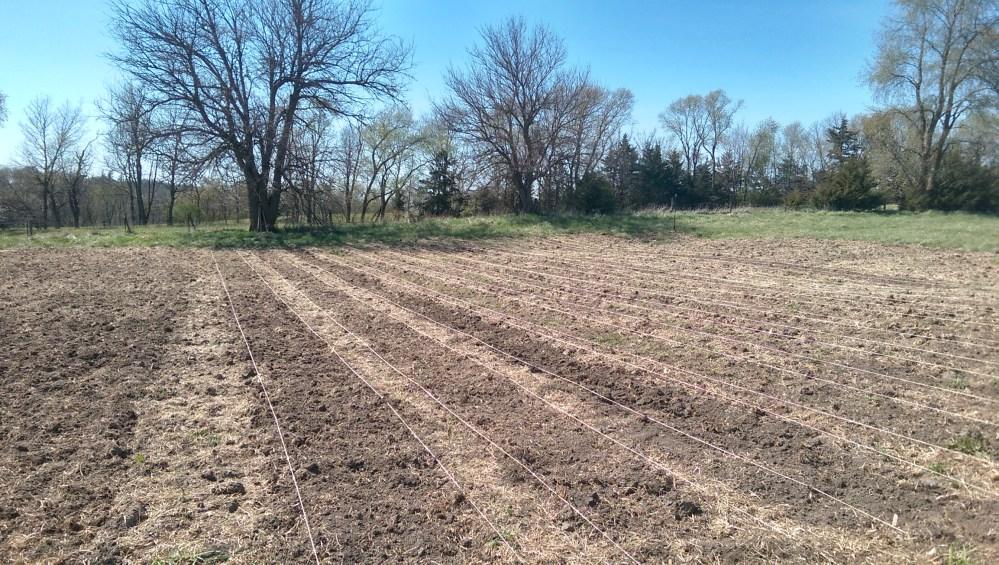Transitional Gardening