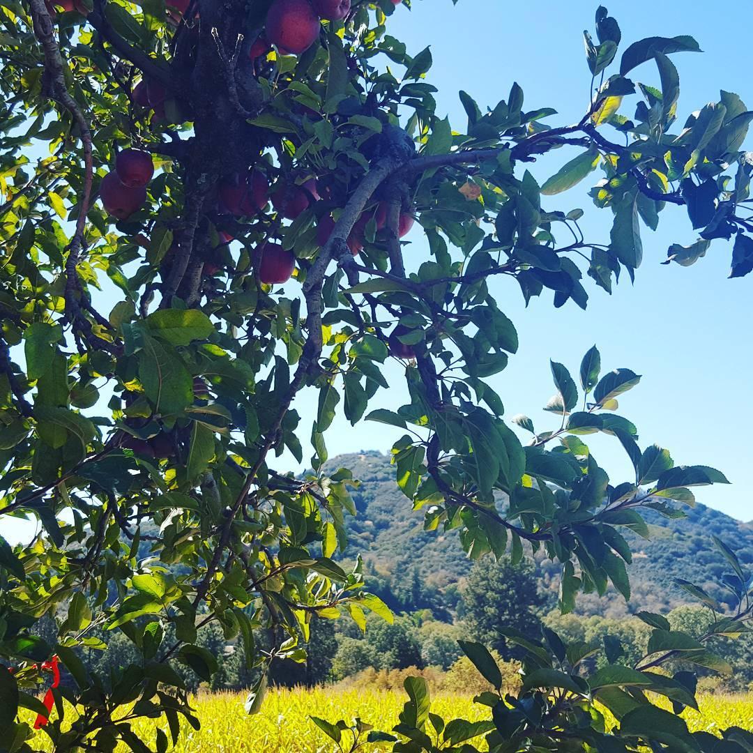 Fall apple picking 🍏🍎