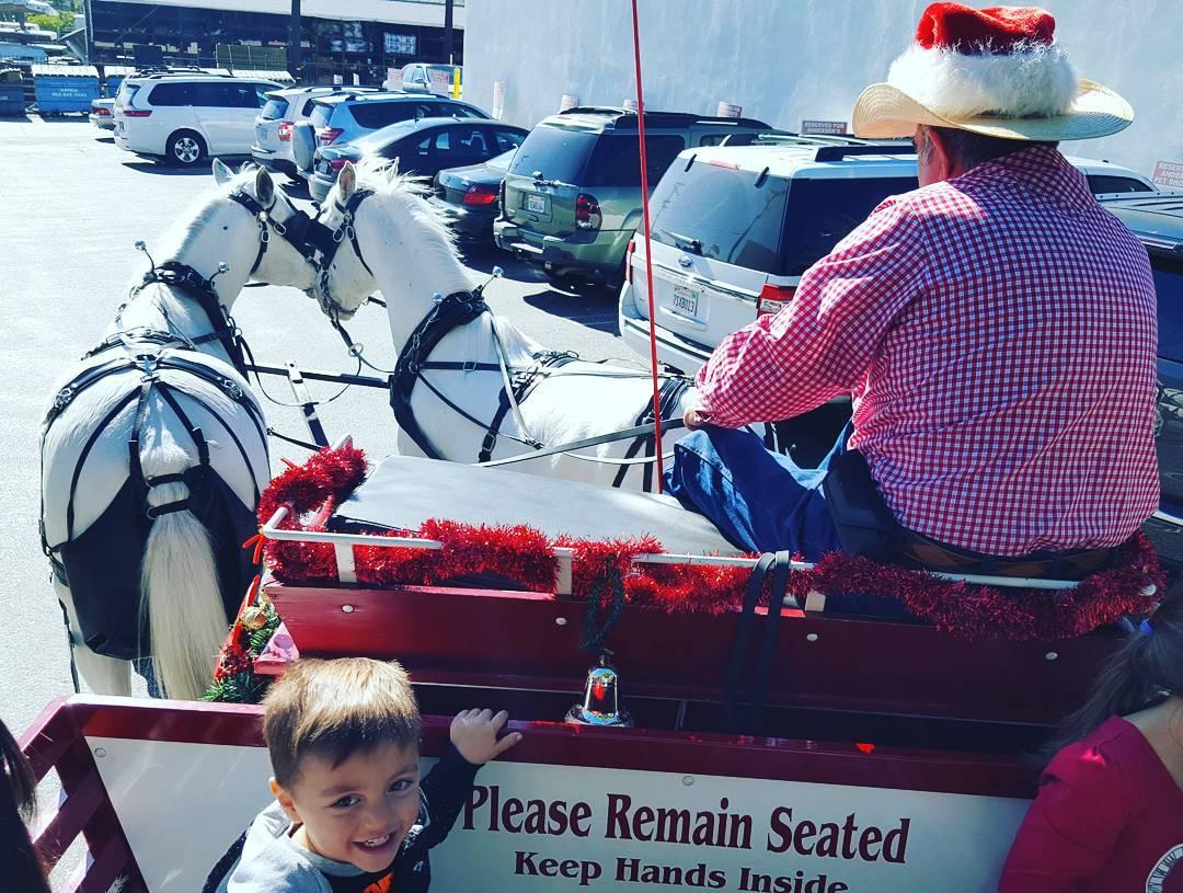 Sleigh ride California style 🎁🌲🌴