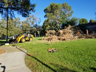 Construction crew removing a tree in Dunsmore Park