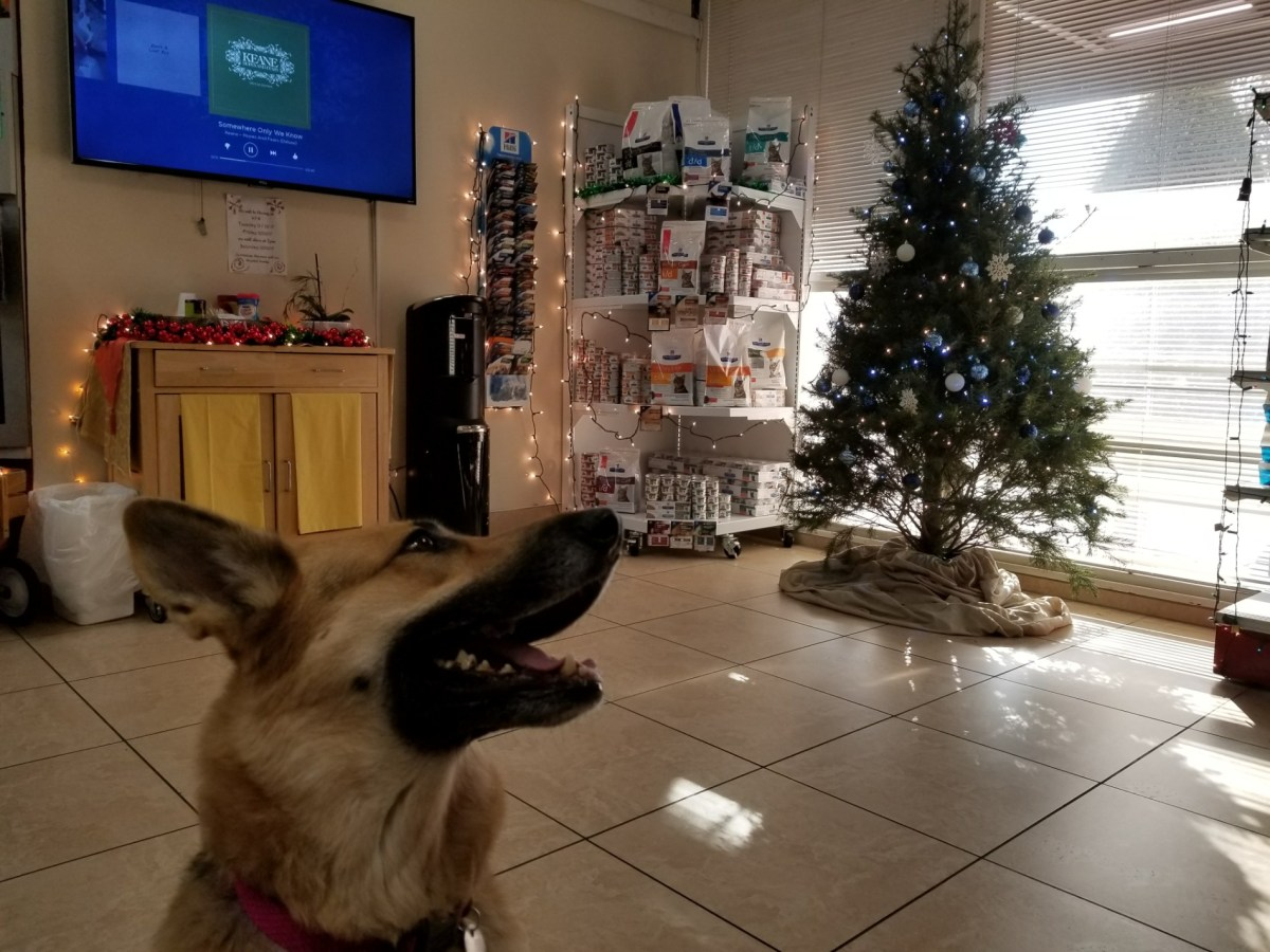 Checkin Dr. Domotor's Animal House Veterinary Hospital