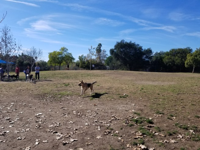 Alice Frost Kennedy Dog Park