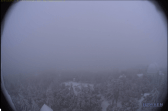 A view of snowy evergreen trees from Mount Wilson's web cam.