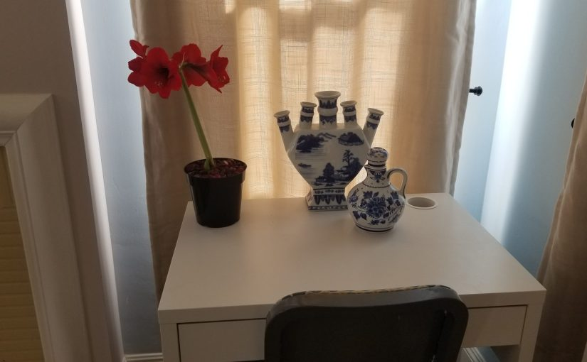 corner of living room with white desk which has a few blue china vases and an Amaryllis bulb in full bloom with four flowers