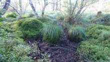 Boggy clumps
