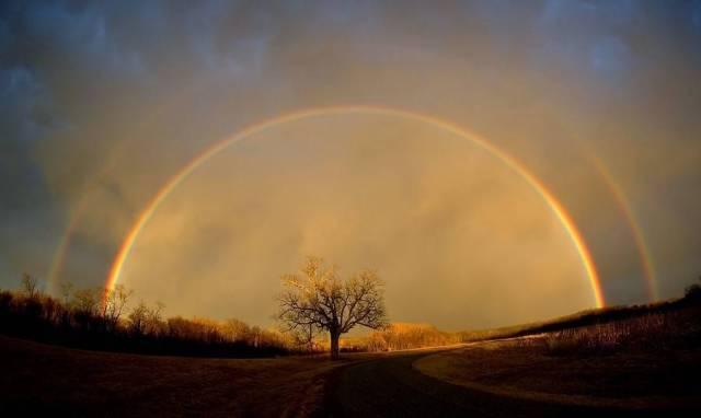 solitary_tree_under_rainbow