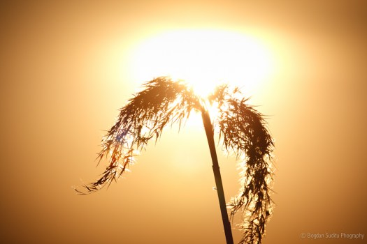 Direct sunlight