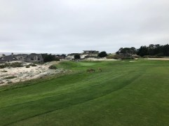 4th approach. (Watch out deer!)
