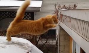 I feel ya, cat.