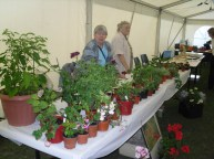 Town Show 2011 - 25