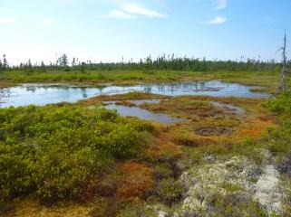 Petite Bog, Nova Scotia