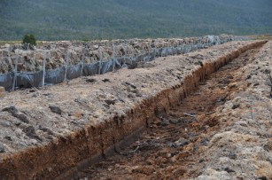 Past peat cutting has contributed to peatland degradation