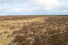 Typical blanket bog of the Flow Country, Caithness, Scotland. Photo credit: David Glass via Wikimedia Commons.