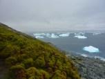 Moss bank in the Antarctic Peninsula