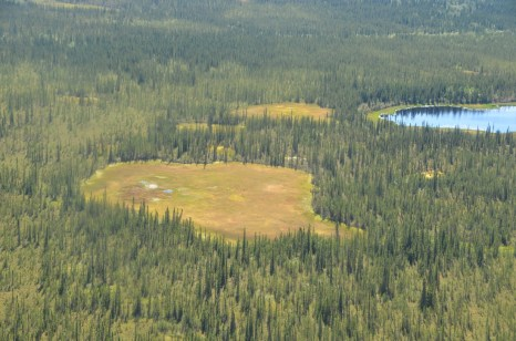 An Alaskan peatland from the air!