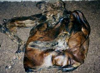 Lindow Man on display in Manchester Musuem (Wikimedia Commons)
