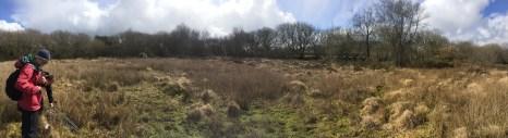 Eden's peatland!