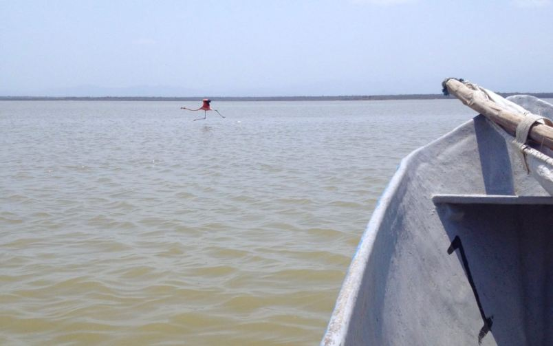 flamingo sanctuary things to do in la guajira
