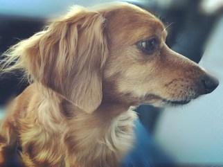 peanut dog in paint your pet