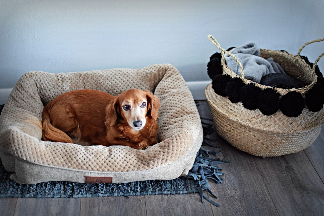 bohemian basket with pom poms and peanut in the city dachshund